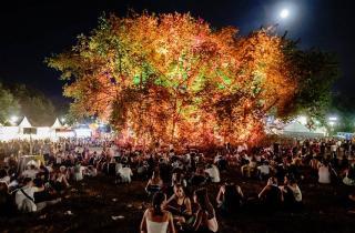 Un arbre à votre nom sur le camping des Eurockéennes de Belfort